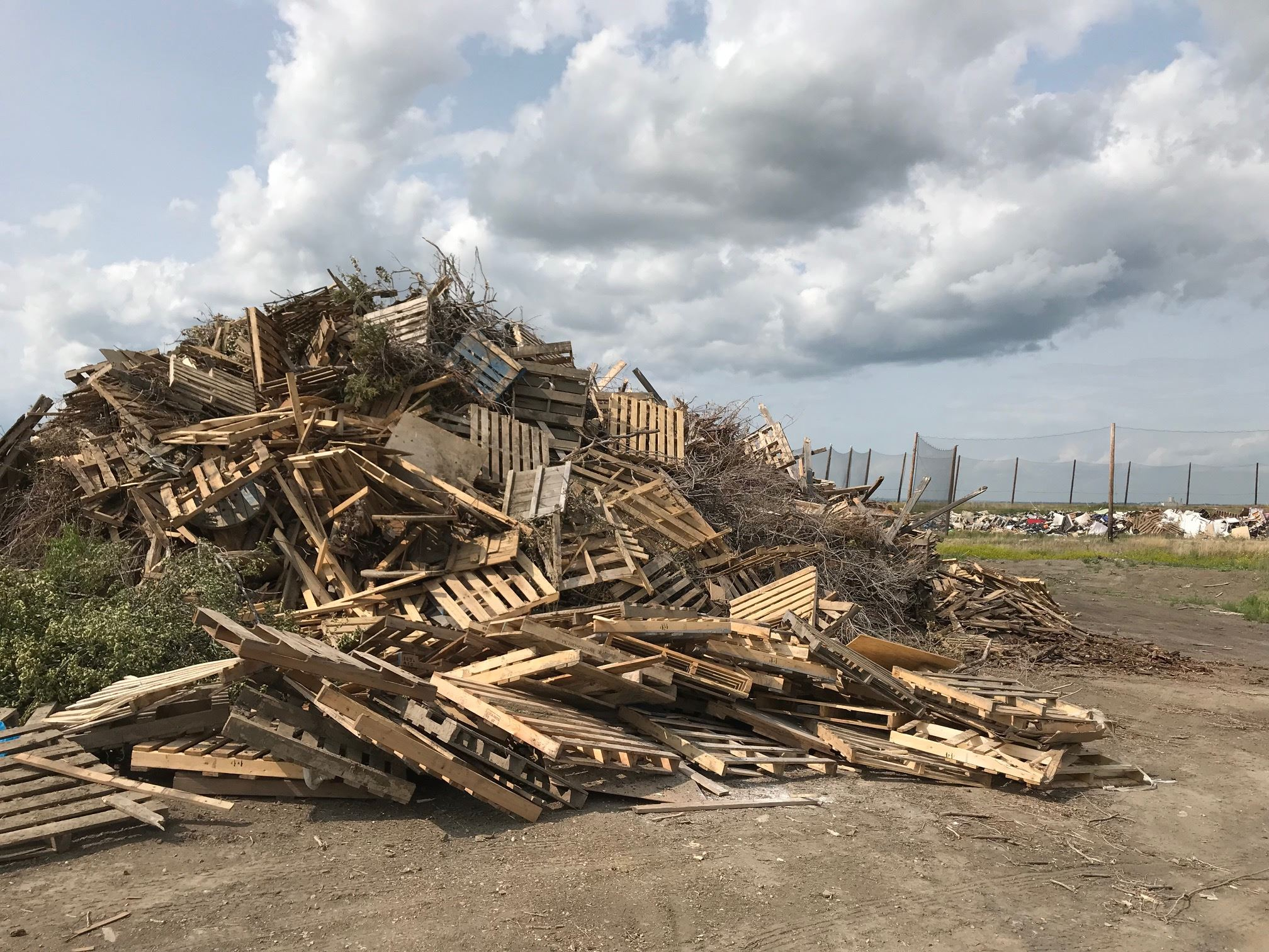 Photo of clean wood pile at landfill